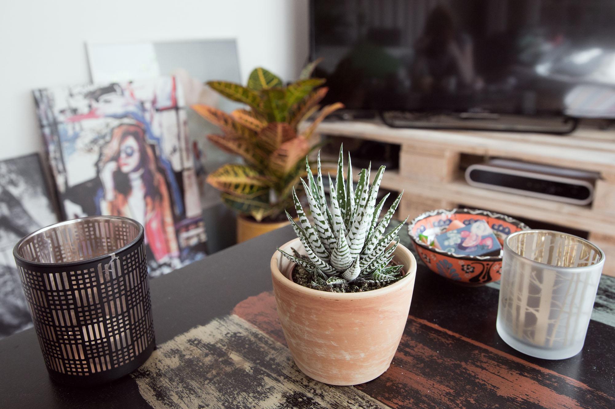 Pflanzen machen das Leben schöner