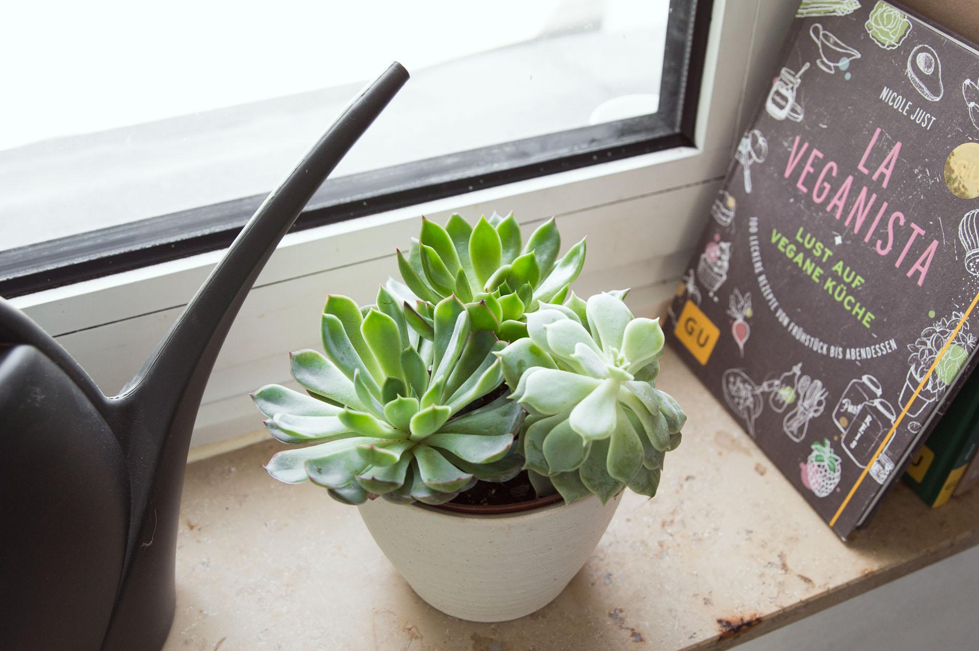 Alles gr n pflanzen machen das leben sch ner for Pflanzen laden berlin