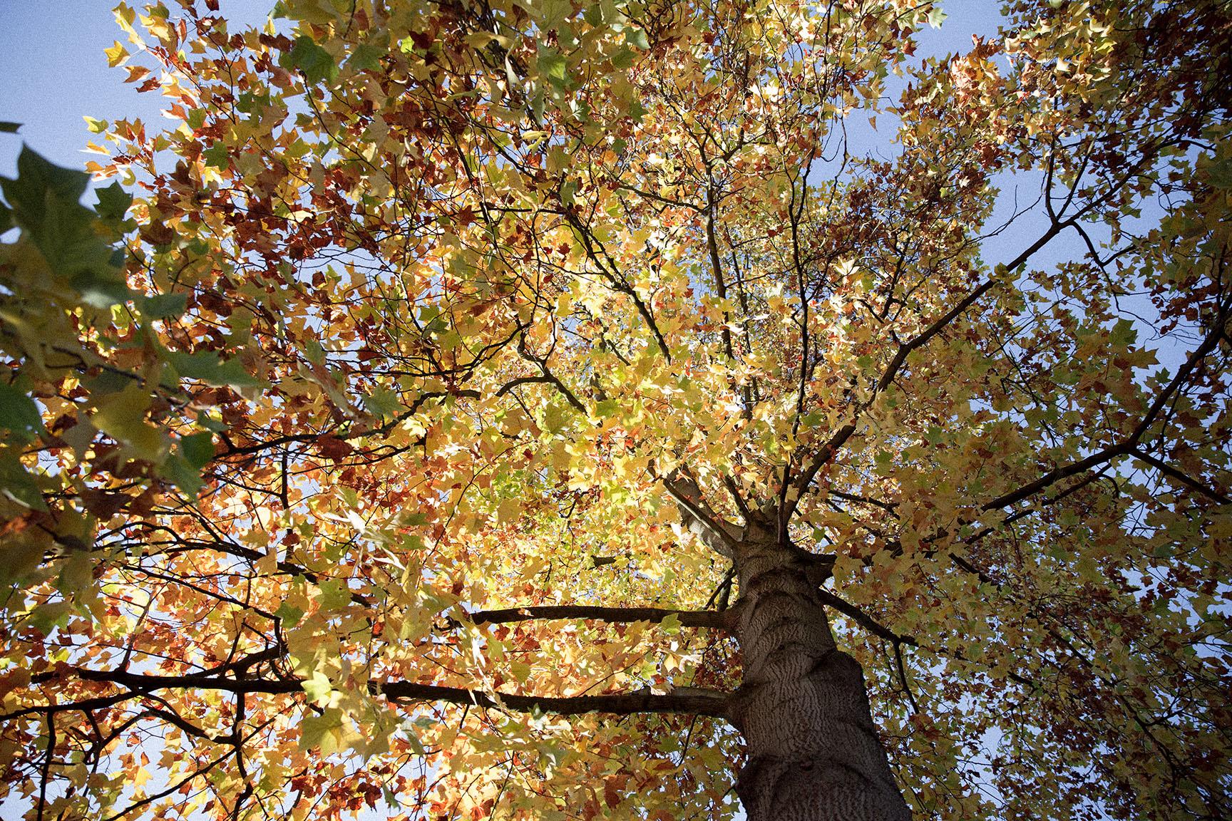 Jeder Tag ein anderer Herbst
